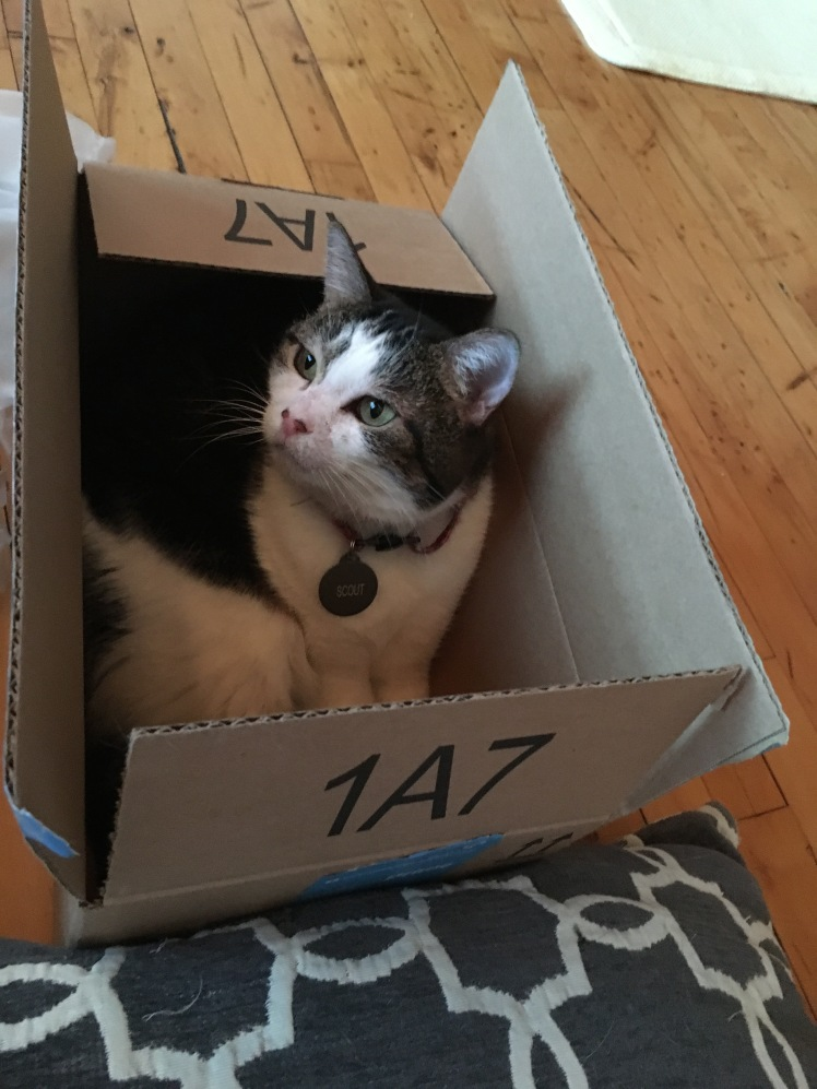 scout-in-a-box