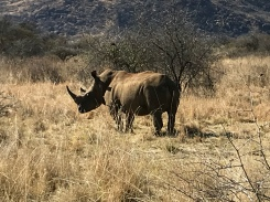Rhino!!