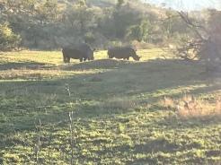 So many amazing rhinos!