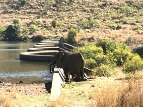 Elephants drinking at the dam! The baby couldn't even reach the water...