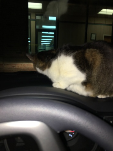 Scout kept wanting to get on the dashboard...