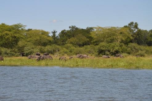 Elephants we saw along the river...