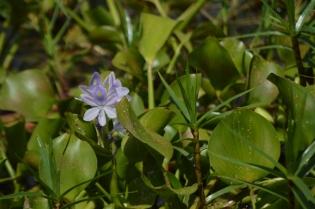Flora and fauna everywhere!