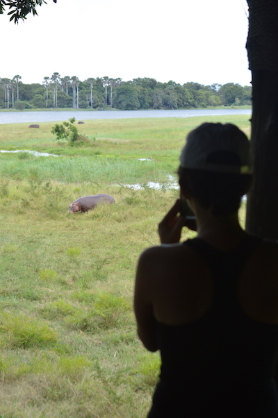 This hippo was REALLY close to the lounge. So cute.