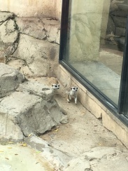 Meerkats at the bird park!
