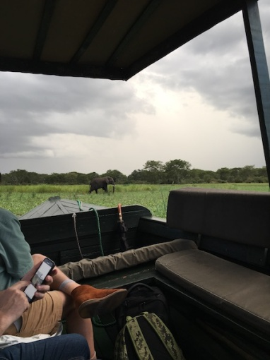 Sure, just some elephants by our boat!