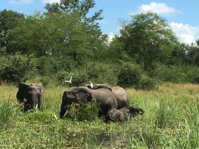 There's a little baby to the right of the elephant with the birds on it, if you can make it out!