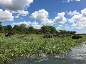 Oh, you know, just a huge herd of elephants, swimming!