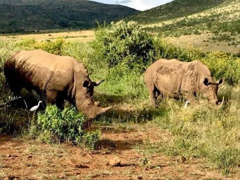Rhinos!!