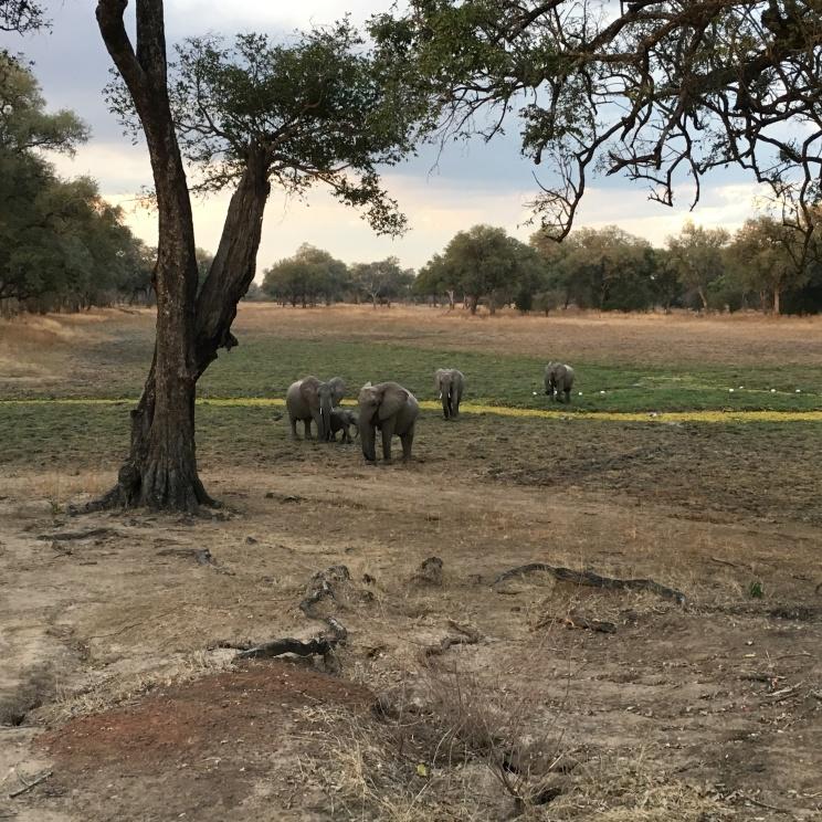 Elephants approaching!