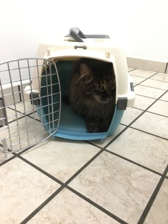 Jack did NOT want to get out of his crate at the vet.