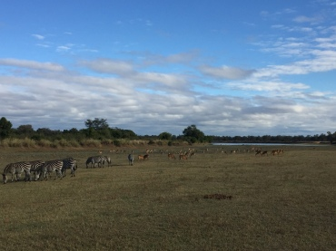 A beautiful savannah with zebras and impala, hanging out!