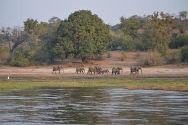 Huge elephant herd!!