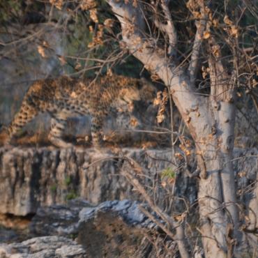 Leopard City!!