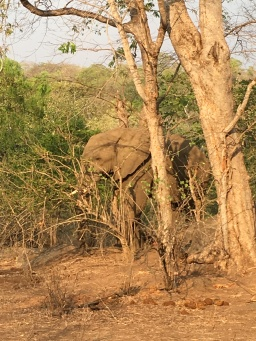 Elephant, having some supper!