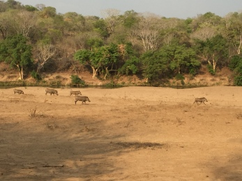 So.Many.Warthogs.