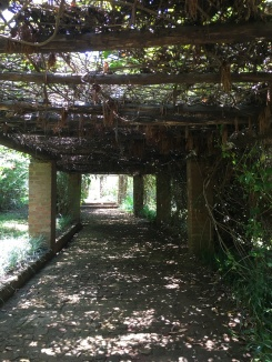 Beautiful canopied walkway...