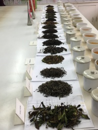 The line-up for the tea tasting!