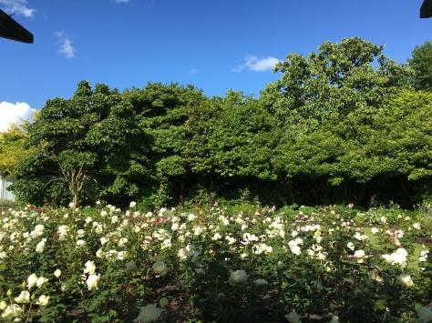 The beautiful gardens!