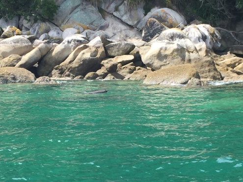 Seals, seen on our hiking trip!