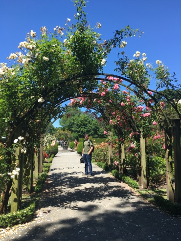 The rose garden at the botanic gardens were gorgeous!