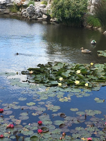 Dunedin Chinese Garden 3