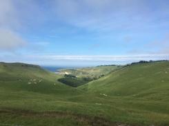 Otago Peninsula 6