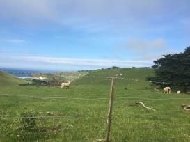Otago Peninsula 7